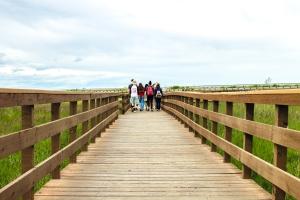Alaska, scenery, tourist, mountain, marsh